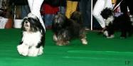 XVIII. Mezinárodní výstava psů PRAHA 2009 fotogalerie č.194