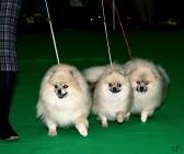 XVIII. Mezinárodní výstava psů PRAHA 2009 fotogalerie č.195