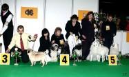 XVIII. Mezinárodní výstava psů PRAHA 2009 fotogalerie č.198