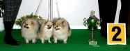 XVIII. Mezinárodní výstava psů PRAHA 2009 fotogalerie č.199