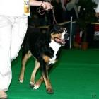 XVIII. Mezinárodní výstava psů PRAHA 2009 fotogalerie č.200