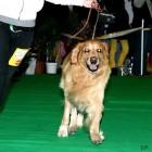 XVIII. Mezinárodní výstava psů PRAHA 2009 fotogalerie č.201