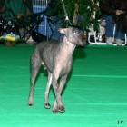XVIII. Mezinárodní výstava psů PRAHA 2009 fotogalerie č.202