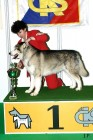 XVIII. Mezinárodní výstava psů PRAHA 2009 fotogalerie č.203