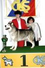 XVIII. Mezinárodní výstava psů PRAHA 2009 fotogalerie č.204