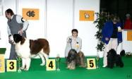 XVIII. Mezinárodní výstava psů PRAHA 2009 fotogalerie č.205