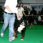XVIII. Mezinárodní výstava psů PRAHA 2009 fotogalerie č.207