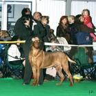 XVIII. Mezinárodní výstava psů PRAHA 2009 fotogalerie č.208