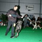 XVIII. Mezinárodní výstava psů PRAHA 2009 fotogalerie č.209