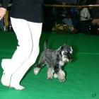 XVIII. Mezinárodní výstava psů PRAHA 2009 fotogalerie č.210