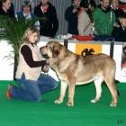 XVIII. Mezinárodní výstava psů PRAHA 2009 fotogalerie č.211