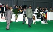 XVIII. Mezinárodní výstava psů PRAHA 2009 fotogalerie č.212