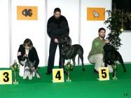 XVIII. Mezinárodní výstava psů PRAHA 2009 fotogalerie č.213
