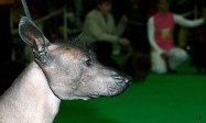 XVIII. Mezinárodní výstava psů PRAHA 2009 fotogalerie č.217