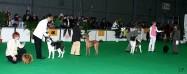 XVIII. Mezinárodní výstava psů PRAHA 2009 fotogalerie č.220
