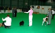 XVIII. Mezinárodní výstava psů PRAHA 2009 fotogalerie č.222