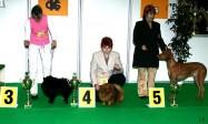 XVIII. Mezinárodní výstava psů PRAHA 2009 fotogalerie č.223