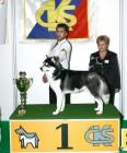 XVIII. Mezinárodní výstava psů PRAHA 2009 fotogalerie č.225