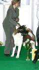 XVIII. Mezinárodní výstava psů PRAHA 2009 fotogalerie č.226