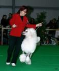 XVIII. Mezinárodní výstava psů PRAHA 2009 fotogalerie č.227