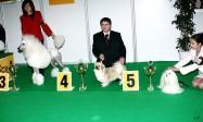 XVIII. Mezinárodní výstava psů PRAHA 2009 fotogalerie č.229