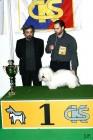 XVIII. Mezinárodní výstava psů PRAHA 2009 fotogalerie č.230