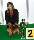 XVIII. Mezinárodní výstava psů PRAHA 2009 fotogalerie č.231
