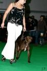 XVIII. Mezinárodní výstava psů PRAHA 2009 fotogalerie č.232