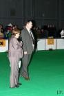 XVIII. Mezinárodní výstava psů PRAHA 2009 fotogalerie č.233