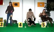 XVIII. Mezinárodní výstava psů PRAHA 2009 fotogalerie č.234