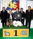 XVIII. Mezinárodní výstava psů PRAHA 2009 fotogalerie č.241