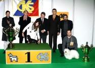 XVIII. Mezinárodní výstava psů PRAHA 2009 fotogalerie č.245